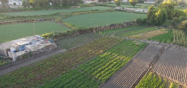 Furrowed Fields